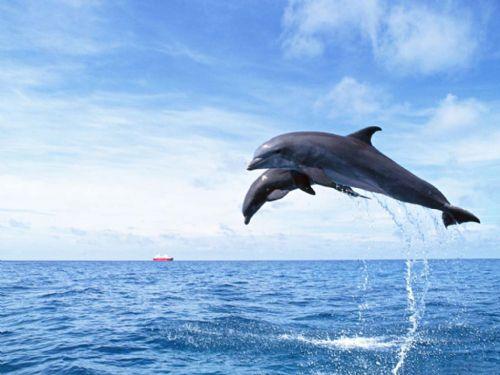 [摄影]小海豚